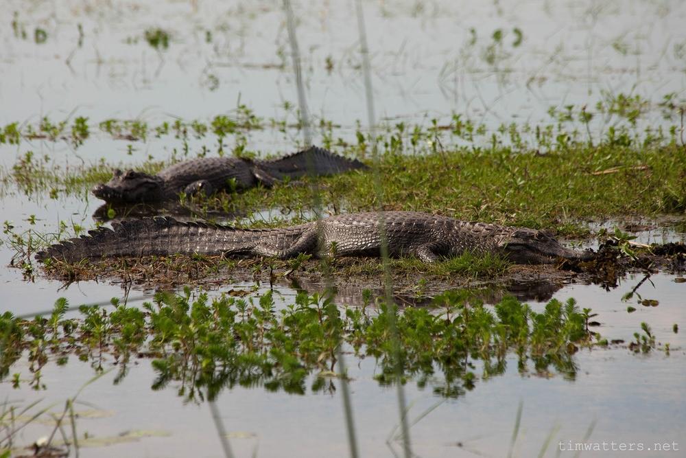 005-TimWatters-Ibera-Wildlife.jpg