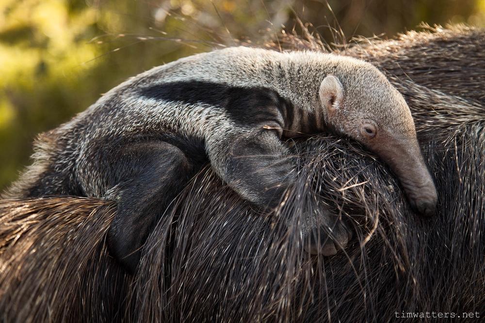 014-TimWatters-Ibera-Wildlife.jpg
