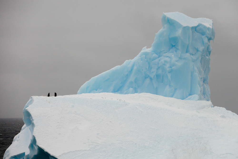 013-TW-Icebergs-140304.jpg