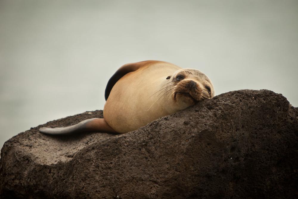 002-TW-Galapagos-121118.jpg
