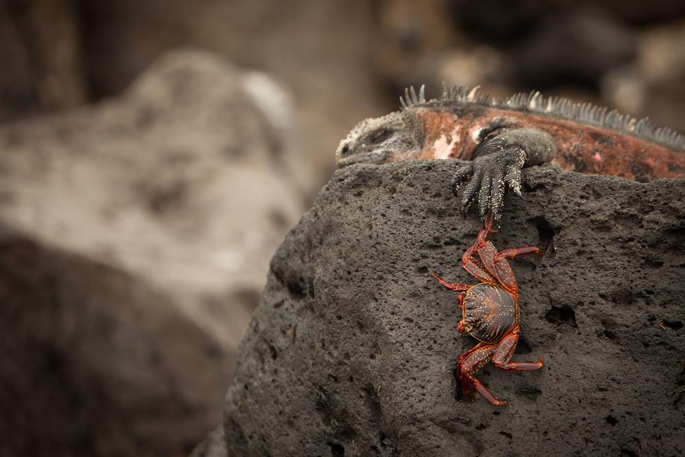004-TW-Galapagos-121118.jpg