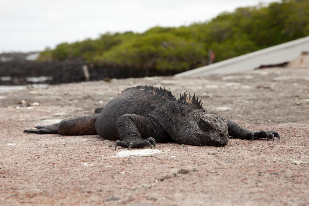 006-TW-Galapagos-121118.jpg