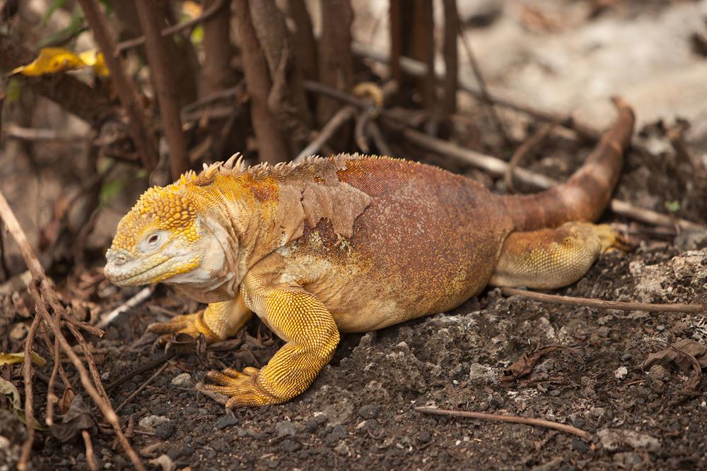 005-TW-Galapagos-121118.jpg