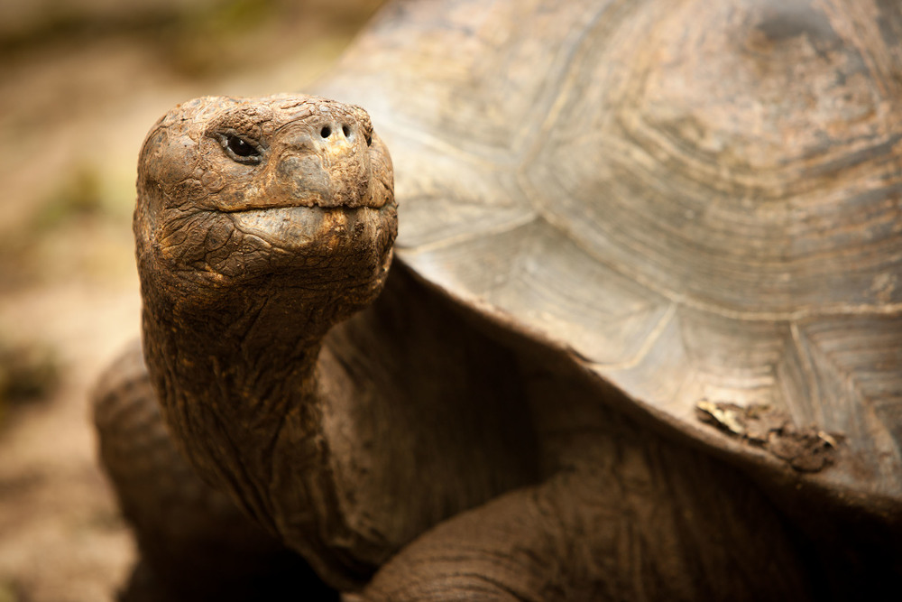 008-TW-Galapagos-121118.jpg