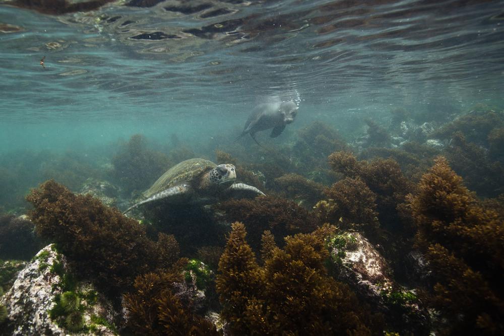 014-TW-Galapagos-121118.jpg