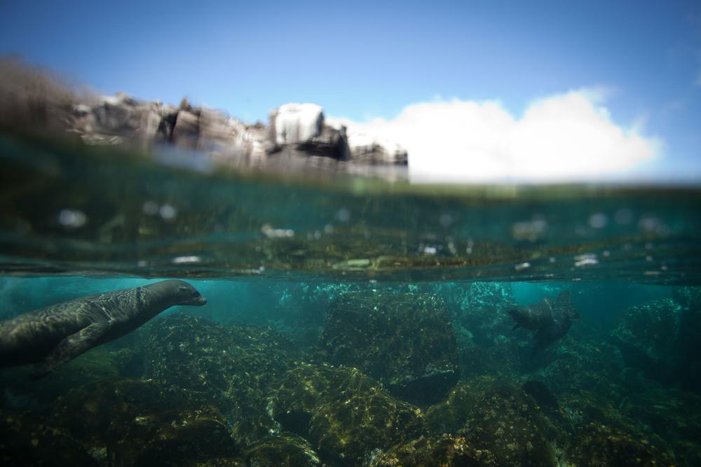 018-TW-Galapagos-121118.jpg