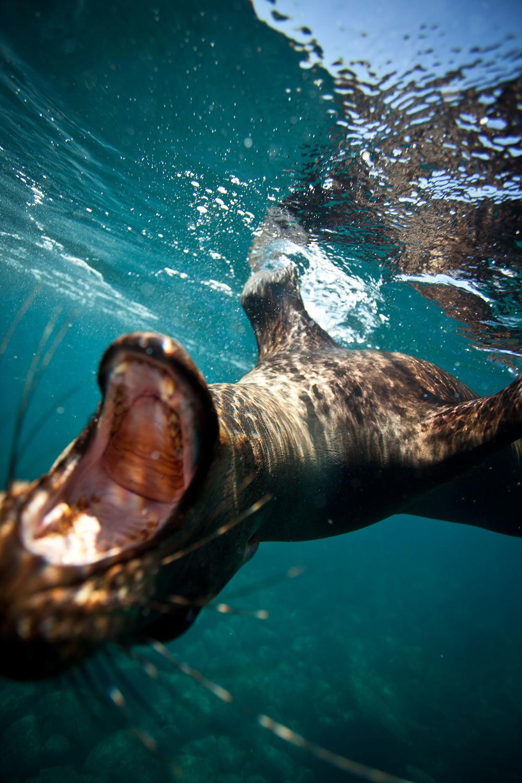 020-TW-Galapagos-121118.jpg