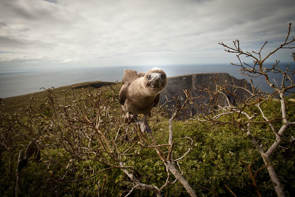 027-TW-Galapagos-121118.jpg