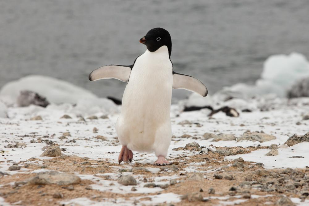 005-TW-Antarctica-140305.jpg