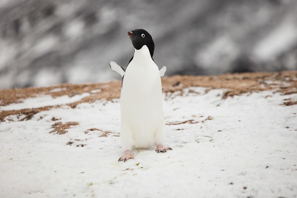 007-TW-Antarctica-140305.jpg