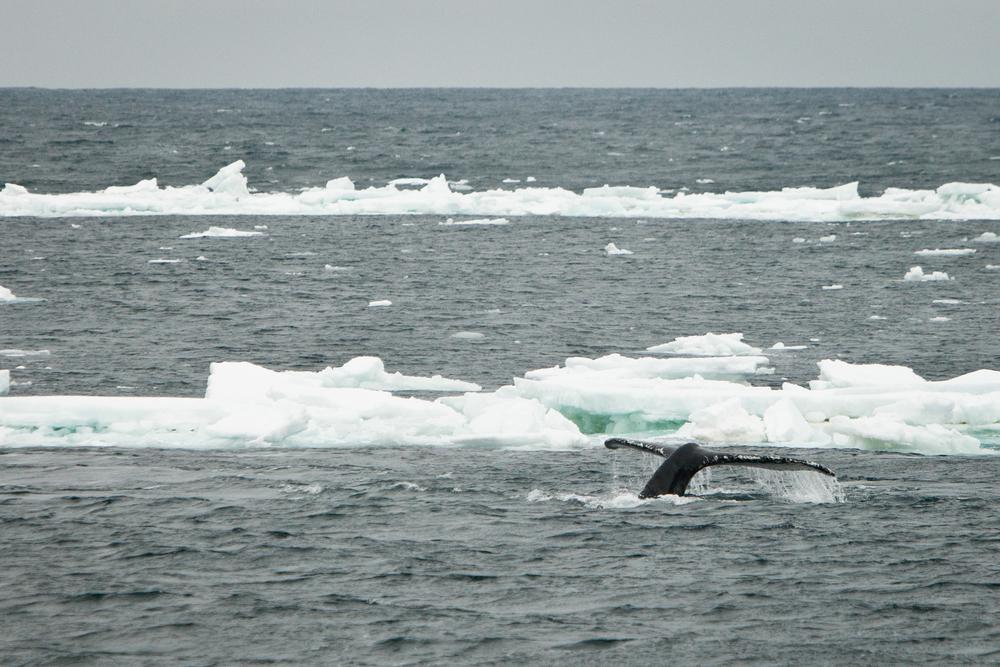 013-TW-Antarctica-130113.jpg