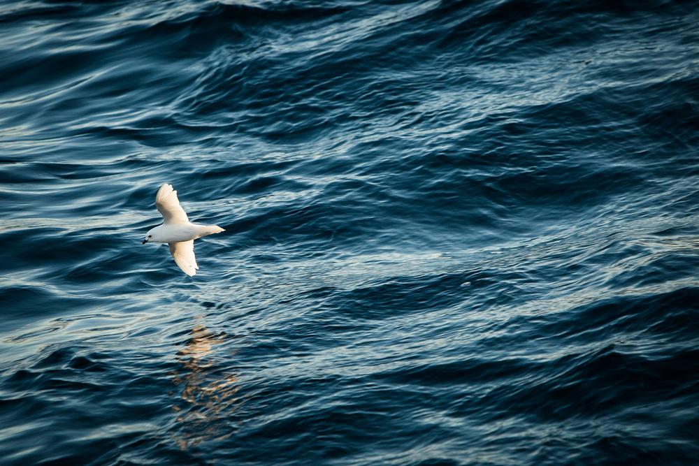 017-TW-Antarctica-140222.jpg