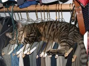 cat+in+hanger.png