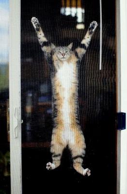 cat+screen.png