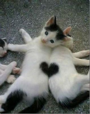 fur+love+cats.png