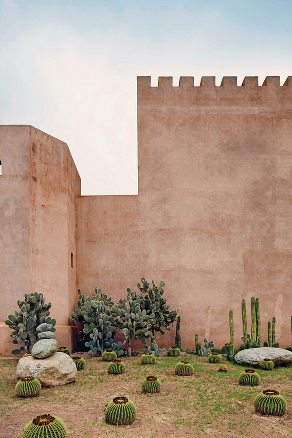 A cactus garden outside the walls of Bravo's home  Tarundant, Morocco
