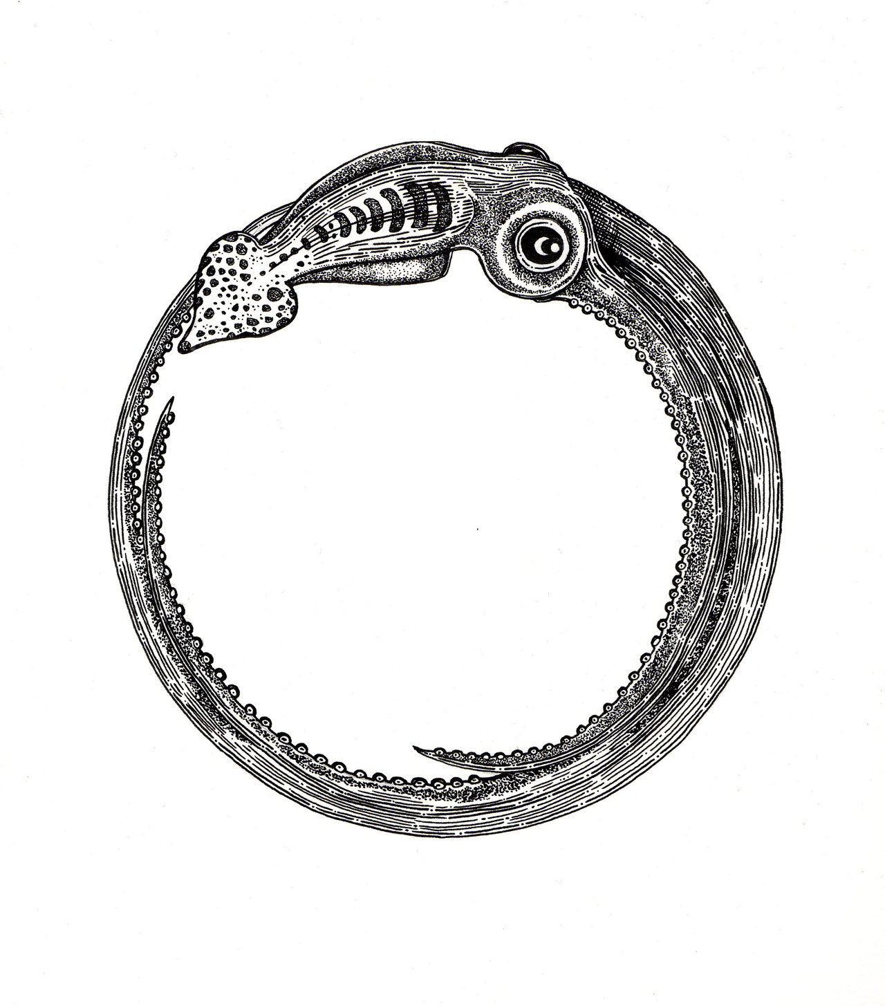 Ouroboros Squid.