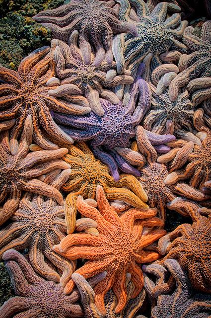colorful starfish by Zanthia