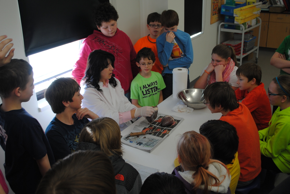 In sixth-grade science, Wadena-Deer Creek students are learning how the heart works in our bodies. Today, students watched intently (and some cautiously) as science teacher Lori Grendahl dissected a deer heart. With each slice, Grendahl would show students where the valves and ventricles are that pumps blood through the heart. The deer heart is similar to a human heart's anatomy. The difference is a human heart weighs more. (Photos by Dana Pavek, WDC Schools)