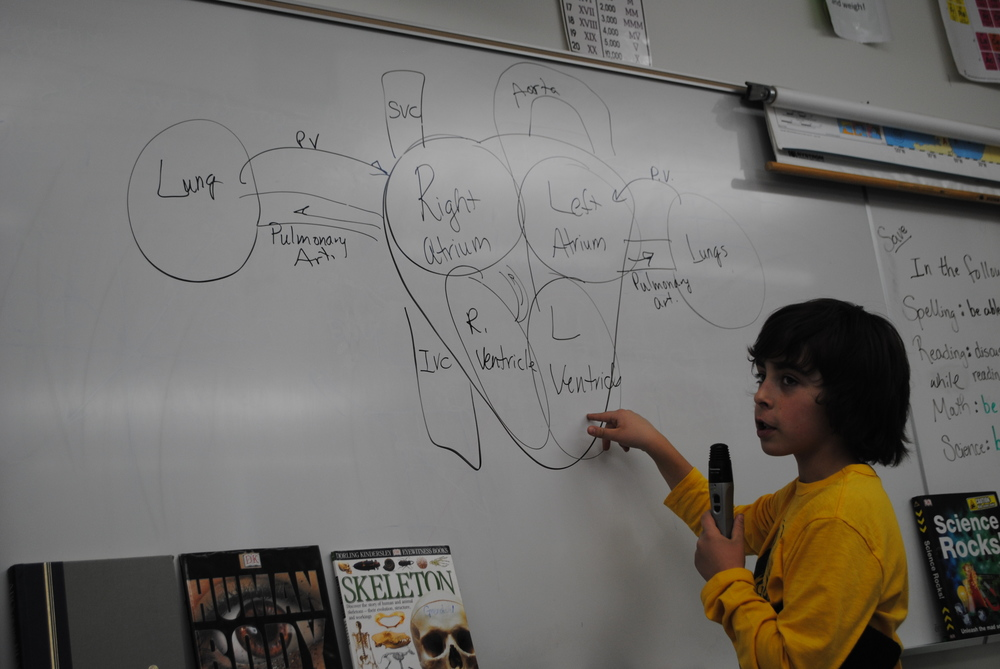Wadena-Deer Creek sixth-grader Beau Breuer explains how the blood flows in and out of the heart.