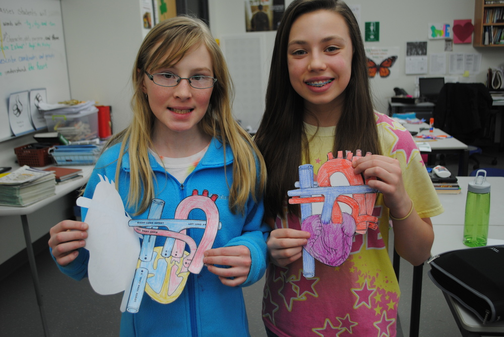Wadena-Deer Creek sixth-graders Eve Collins and Kamea Shreves finish their detailed diagrams of the heart valves and chambers in science class.