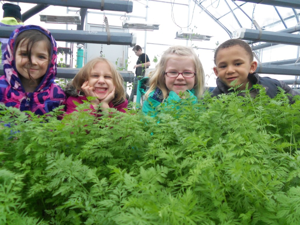 Shelley Steffens' kindergarten students checked out the beautiful, bountiful carrots growing in the WDC Greenhouse recently. Area farmers are asked to nominate WDC Schools for a $25,000 grant to build a high-tunnel  greenhouse to grow more fresh produce for school lunches and expand agriculture education. (Photo by Shelley Steffens, WDC Schools)