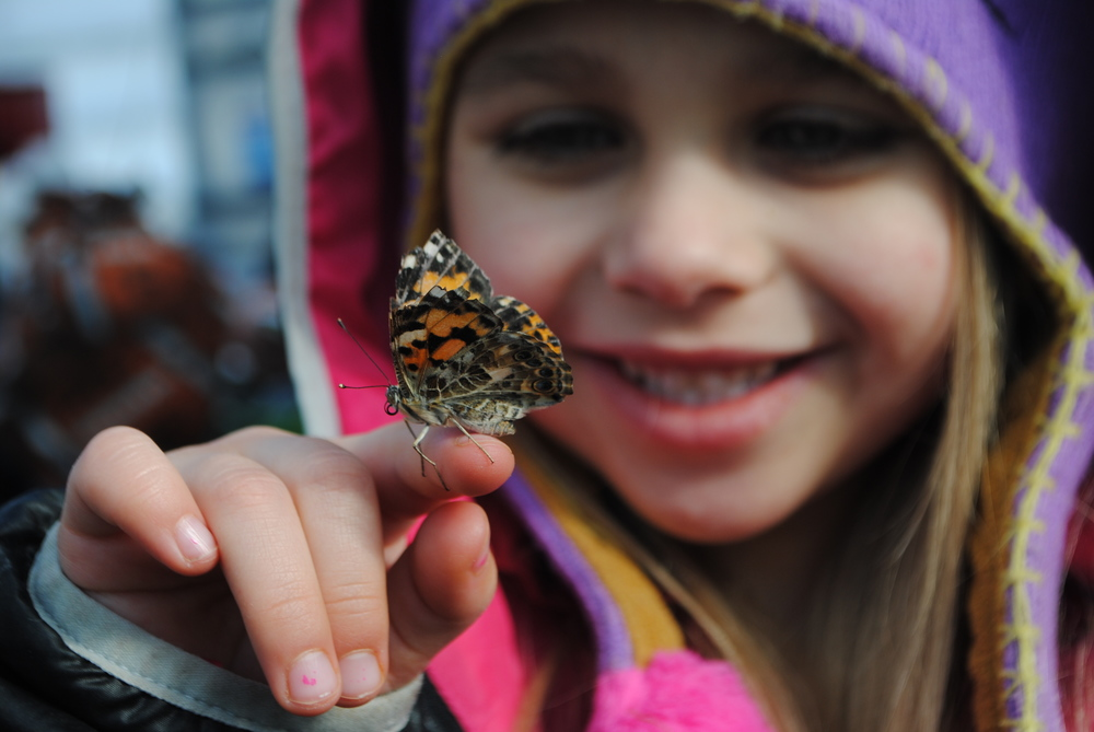 WDC preschooler Jazmine Sweazey delights in holding a Painted Lady Butterfly in the WDC Greenhouse. Alicia Johnson's preschool classes hatched the medium-sized butterflies in their classrooms and then released them in the WDC Greenhouse last week. (Photos by Dana Pavek, WDC Schools)