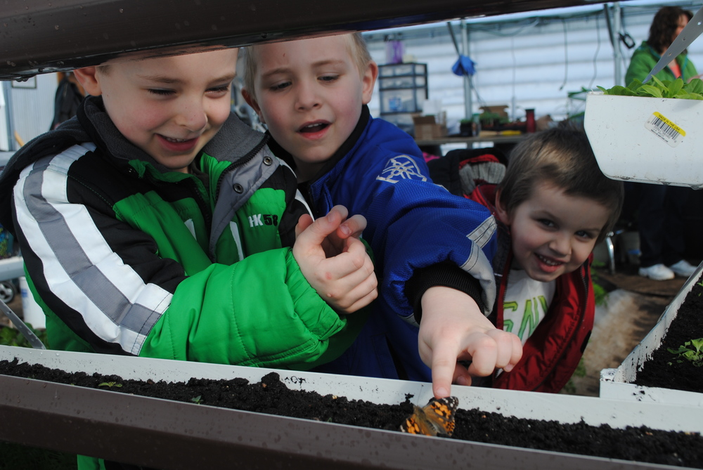 From left, Nick Steinke, Jaren Robinson and Noah Hall attempt to coax a Painted Lady butterfly on to their finger in the WDC Greenhouse.