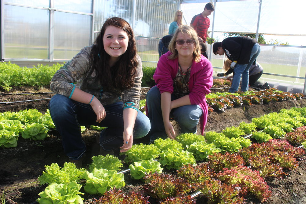 WDC students Brianna Burke, left, and Kimberly Bendlen said they like the hands-on learning in the greenhouse, from planting seeds to harvesting the produce. Burke and Bendlen are students in Richard Muckala's Plant and Horticulture Science class. Photos by Dana Pavek, WDC Schools.