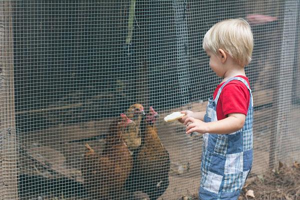 Feeding Chickens in East Atlanta