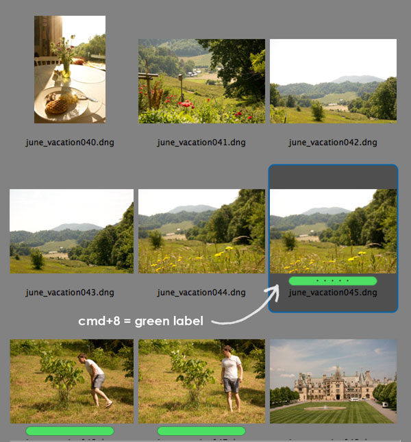 Adobe Bridge short cut for labeling photos