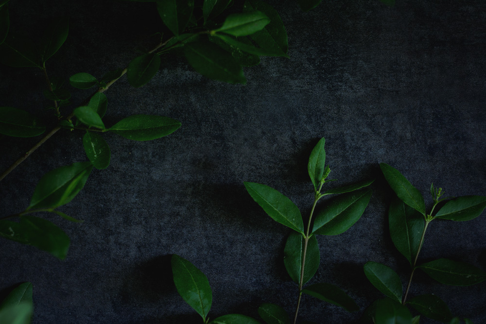 Moody Still Life - foraged greenery