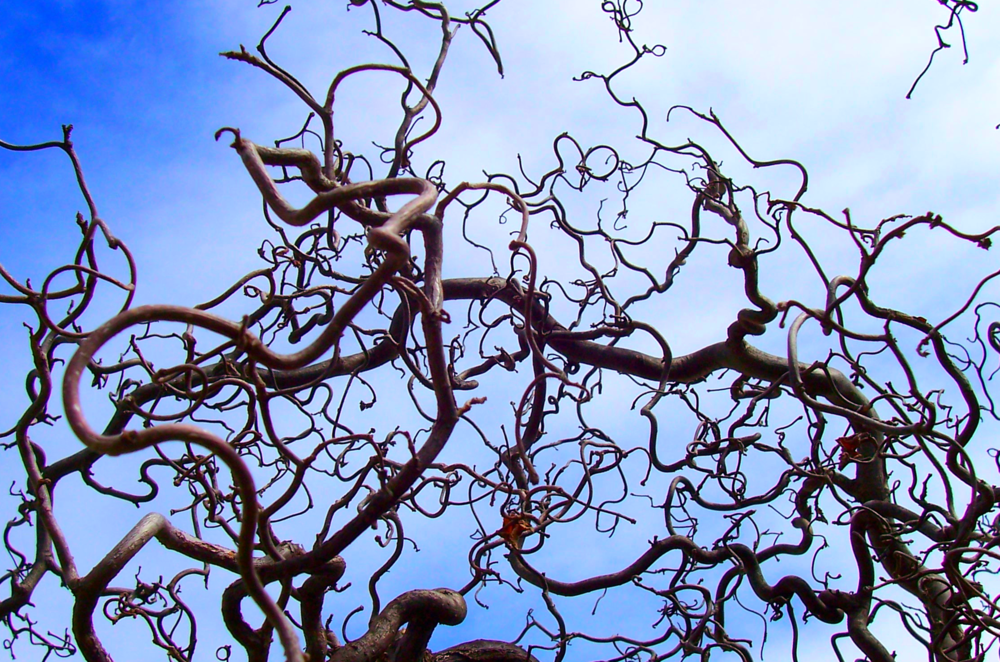 """gnarl"", photo de tournevis, 2005"