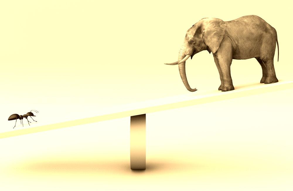 Elephant Ant Balance.jpg