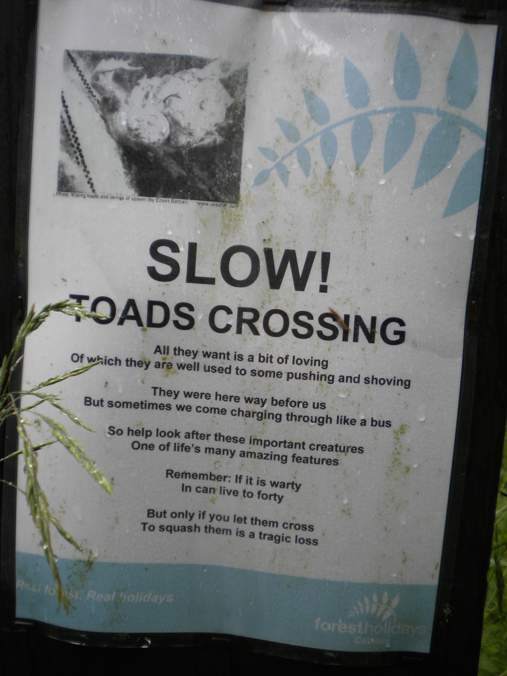 Toad awareness campaign