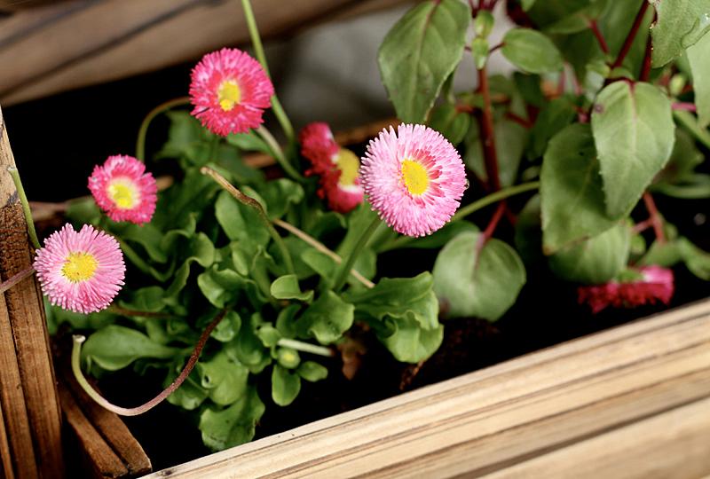FlowersForMe.jpg