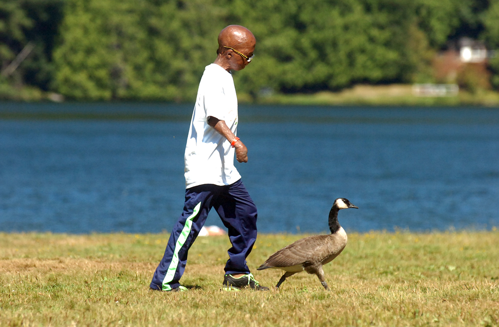 After trying to direct a wild goose every which way, Sean Bigelow, 11, of Austin, Texas, walks next to it at Lake Samish on Wednesday, Aug. 22, 2013, in Bellingham, Wash. The week-long annual summer camp is aimed to help children emotionally recover from burn injuries. Sean sustained burns when he was 20 months old during a car fire in his home state of Texas. The fire left scaring on most of his body, including the loss of all of his fingers.