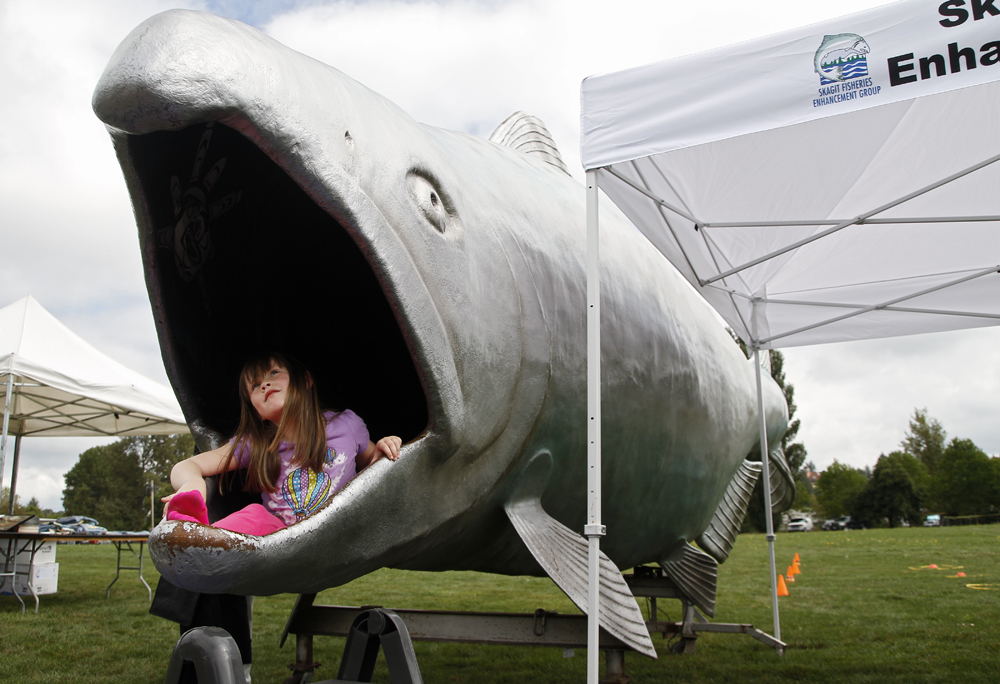 Reagan Grinton, 6, of Lyman, sits at the mouth of Fin, a 25-foot long fiberglass salmon, at the Skagit River Salmon Festival on Saturday, Sept. 7, 2013, at Edgewater Park in Mount Vernon. Nick Gonzales / Skagit Valley Herald