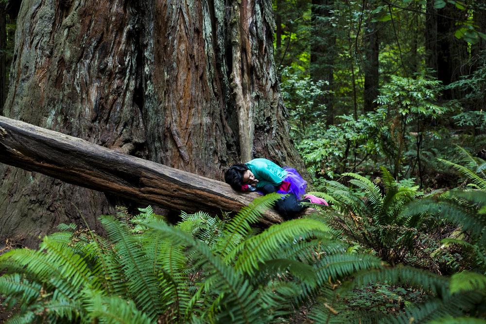 Jedediah Smith Redwoods State Park, California | August 2016
