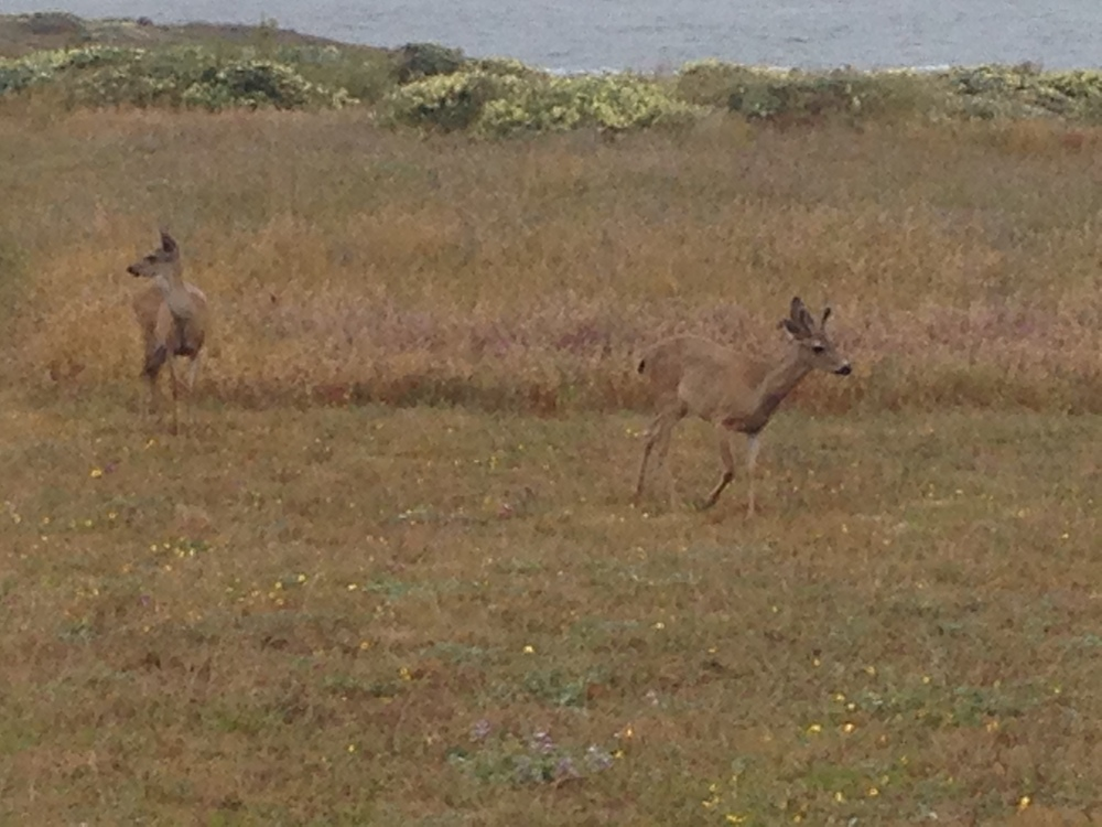 Deer outside our front windows. They visited us every day. This couple had two babies with them.