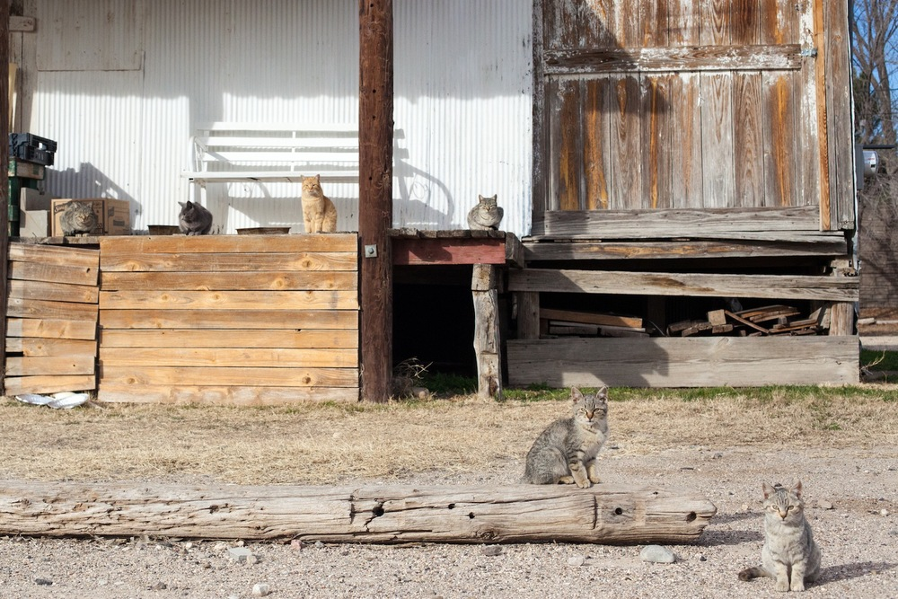 Marathon-Texas-Cats.jpg