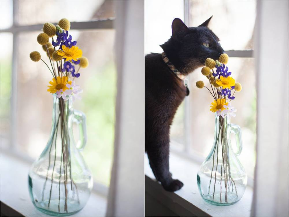 Butter sniffing the flowers Ty picked for me on the first day of spring. He always has to participate in photo shoots. How I love my tiny family.