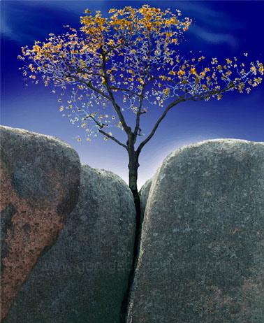 perseverance-21.5X36.jpg