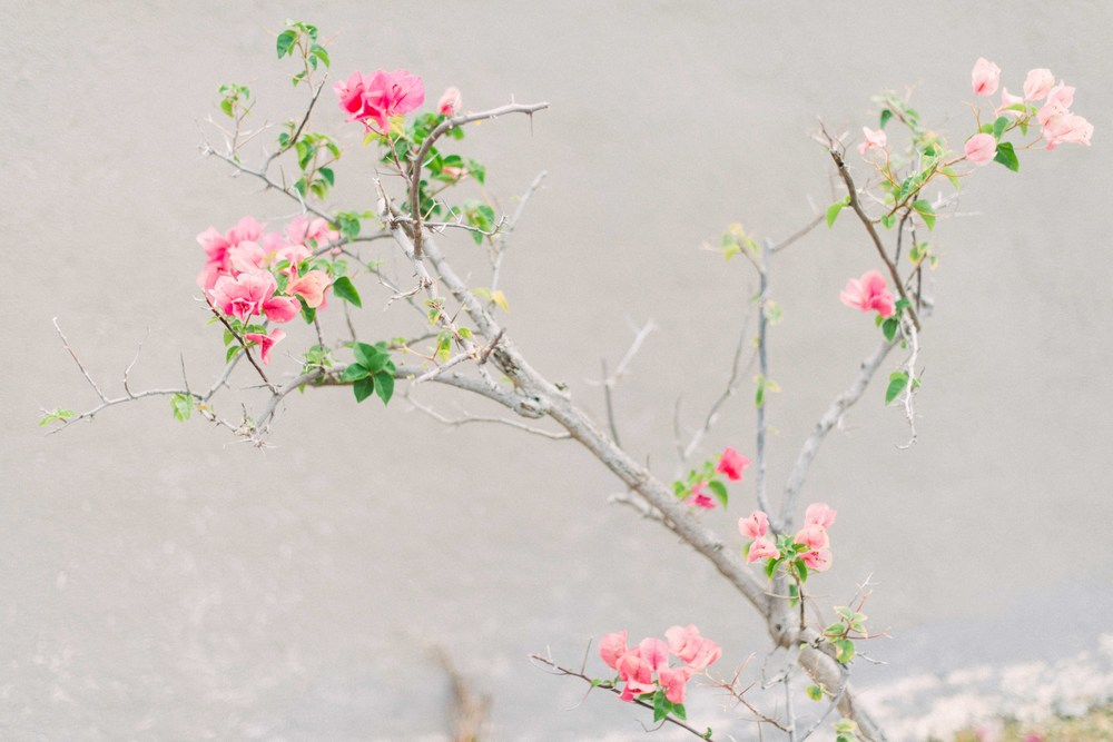 Maui elopement flowers