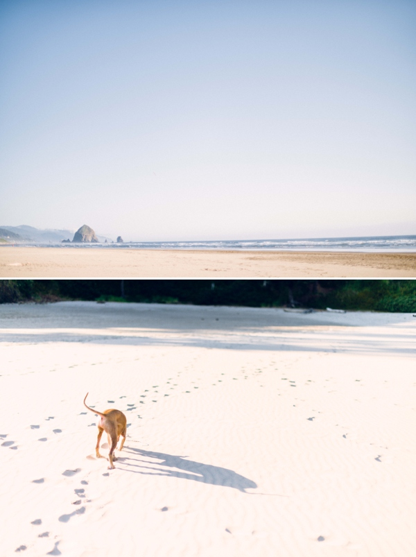 oregon coast photographer.jpg
