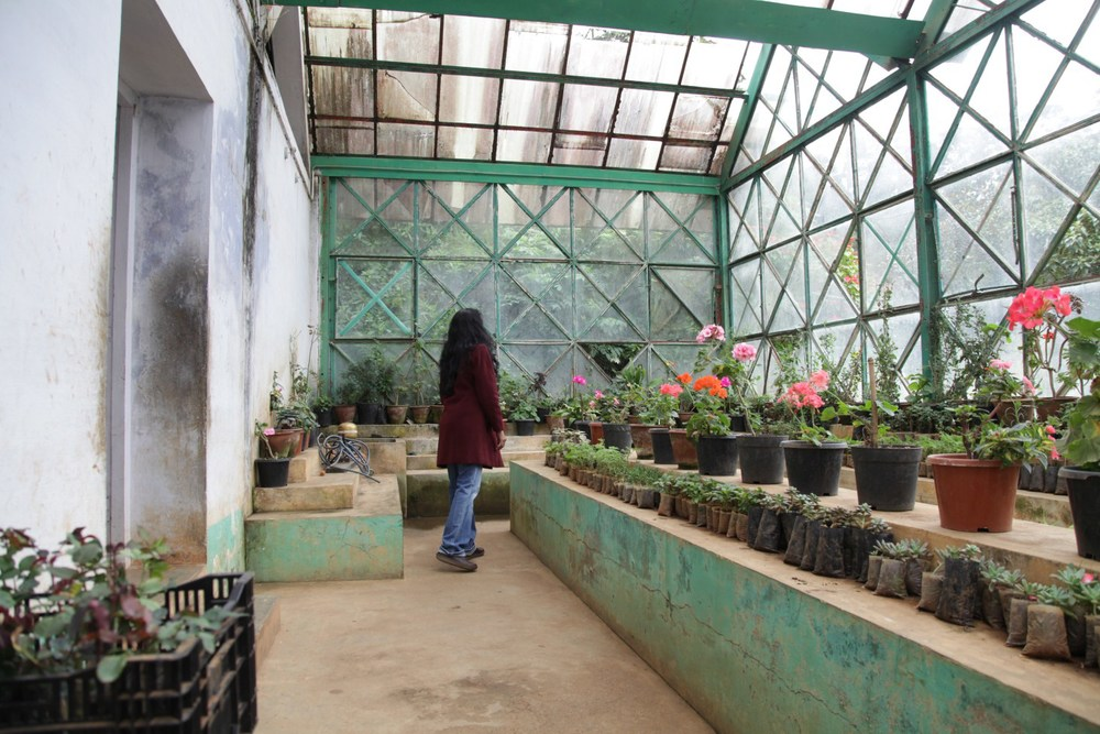 Greenhouse at the Botanical Gardens, Ooty, Nilgiris, India.