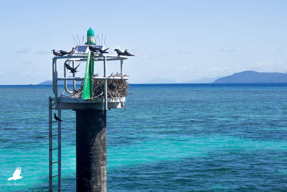 This functional sea pylon is also a nest - among others.