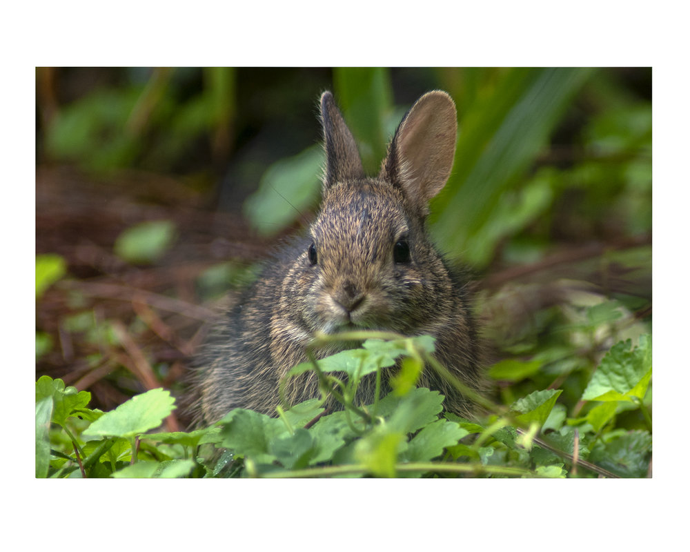 bunny_photos_stanislawakodman.jpg