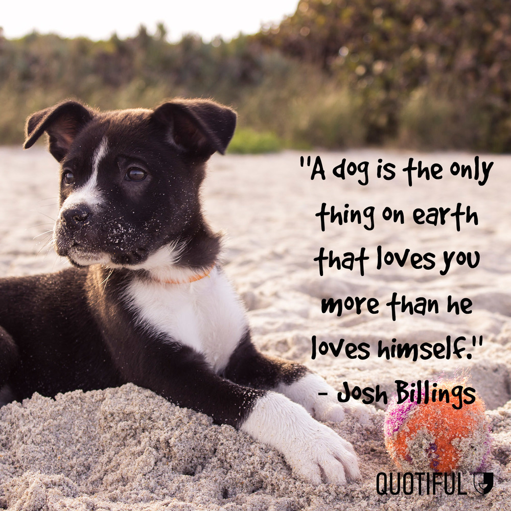 Dog Love Quotes 10 Dog Quotes That Will Melt Your Heart  Quotiful