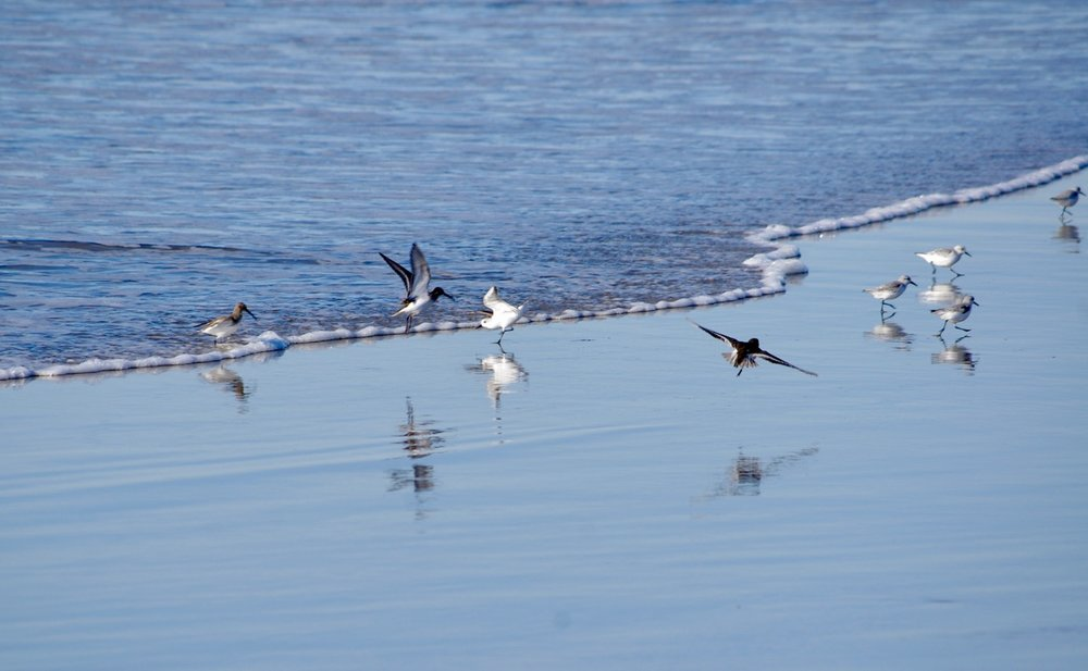 And here is a bunch of birds doing what birds do best…running away from people.